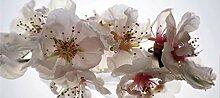 Fototapete FTNh2742 Photomurals Blumen