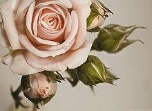 Fototapete FTNm2620 Photomurals Rosa Rose