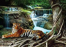 Fototapete FTNm2652 Photomurals Tiger