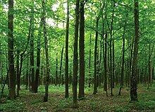 Fototapete FTNm2656 Photomurals Wald