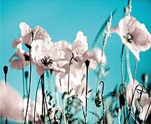 Fototapete FTNxxl0118 Photomurals Mohn