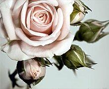 Fototapete FTNxxl0313 Photomurals Rose