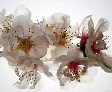 Fototapete FTNxxl0385, Blumen