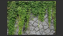 Fototapete Grüne Wand 280 cm x 400 cm