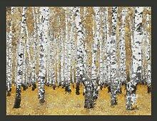Fototapete Herbstlicher Birkenwald 154 cm x 200 cm