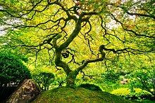 Fototapete Japanese Maple Tree, Home affaire