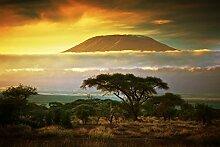 Fototapete KILIMANJARO AFRIKA-(350p)-Größe