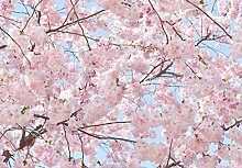 Fototapete - KIRSCHBLÜTEN - (155i) Größe 366x254 cm 8-teilig - Kirsche Blumen Baum Wald Sonne Bäume Landschaft Natur Wohnzimmer Kinderzimmer Küche- Motivtapete Postertapete Bildtapete Wall Mural