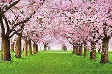 Fototapete Kirschblüten Wandbild Dekoration