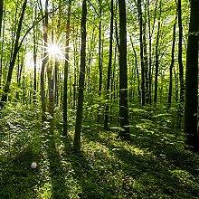 Fototapete Landschaft Für Wände Wandbild Grünen