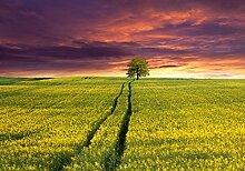 Fototapete Landschaft mit einem Feld von gelben