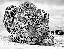 Fototapete Leopard 396 x 280 cm Vlies Wand Tapete