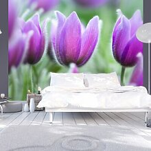 Fototapete Lila Tulpen im Frühling 193 cm x 250 cm