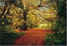 Fototapete Motivtapete Bildtapete Autumn Forrest