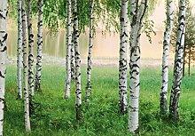 Fototapete - NORDIC FOREST Birken-Wald - (290i)