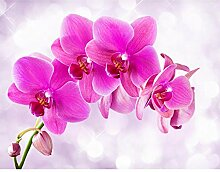 Fototapete Orchidee Pink Vlies Wand Tapete