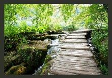 Fototapete Pfad im Wald 245 cm x 350 cm