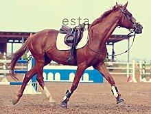 Fototapete Pferd Braun - 158806 - von ESTAhome.nl