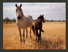 Fototapete Pferd und Fohlen 270 cm x 350 cm