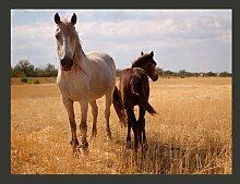 Fototapete Pferd und Fohlen 309 cm x 400 cm