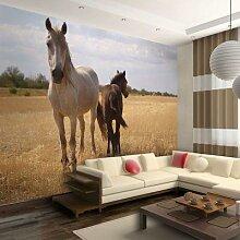 Fototapete Pferd und Fohlen mehrfarbig