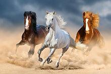 Fototapete Pferde 114734270