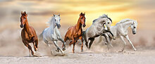 Fototapete Pferde 118057074