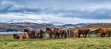 Fototapete Pferde 159511367