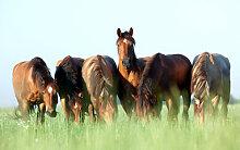 Fototapete Pferde 40805380