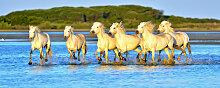 Fototapete Pferde 90936416