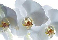 Fototapete Poster XXL Blume Orchidee weiß Floral