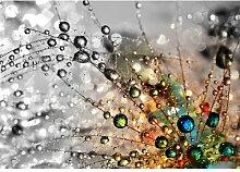 Fototapete Pusteblume 0.70 m x 104 cm