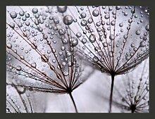 Fototapete Pusteblume im Morgentau 270 cm x 350 cm