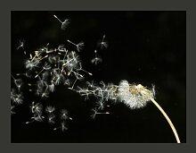 Fototapete Pusteblume im Wind 193 cm x 250 cm
