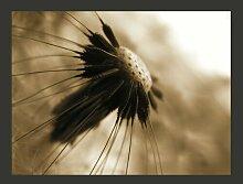 Fototapete Pusteblume - sepia 154 cm x 200 cm
