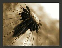 Fototapete Pusteblume - sepia 270 cm x 350 cm