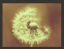 Fototapete Pusteblume (sepia) 309 cm x 400 cm