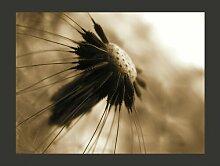 Fototapete Pusteblume - sepia 309 cm x 400 cm