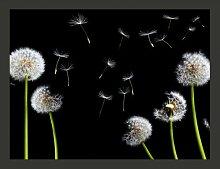 Fototapete Pusteblume: Vom Winde verweht 270 cm x