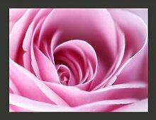 Fototapete Rosa Rosa 154 cm x 200 cm East Urban