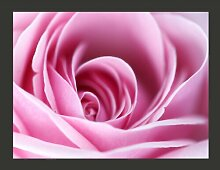 Fototapete Rosa Rosa 270 cm x 350 cm East Urban