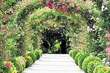 Fototapete Rose Arch Garden, Home affaire (B/H):