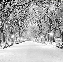 Fototapete Schnee-Straßen-Baum-nichtgewebte