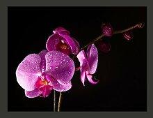 Fototapete stilvoll Orchidee 270 cm x 350 cm
