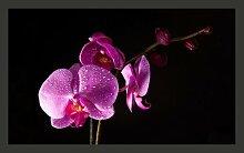 Fototapete stilvoll Orchidee 270 cm x 450 cm