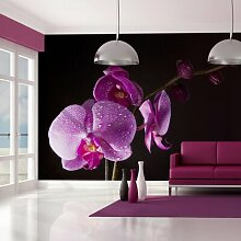 Fototapete stilvoll Orchidee 309 cm x 400 cm