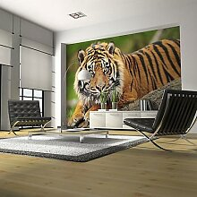 Fototapete Sumatra -Tiger mehrfarbig