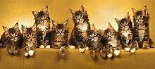 Fototapete Tapete Katzen Kätzchen braun beige