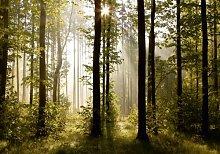 Fototapete Tapete Natur Wald Bäume Lichtspiel