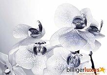 Fototapete Tapete Orchidee Blume Blüte weiß Foto